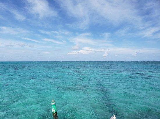 Ảnh về 6.5-Hour Catamaran Cruise to Stingray City and Rum Point Beach