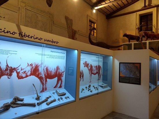 Paleolab - Museo delle Raccolte Paleontologiche dell'Umbria Meridionale