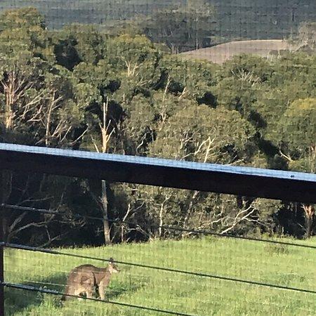 Bilde fra Wattle Hill