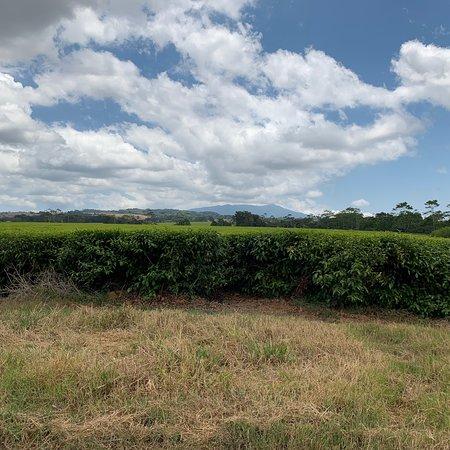 Nerada Tea Plantation (Malanda): UPDATED 2019 All You Need ...