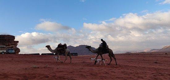 Amazing Camp in Wadi Rum