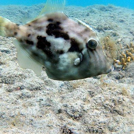 Dive Pro Fuerte: Diving in La Lajita Costa Calma Fuerteventura