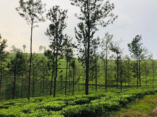 An awesome tea estate destination