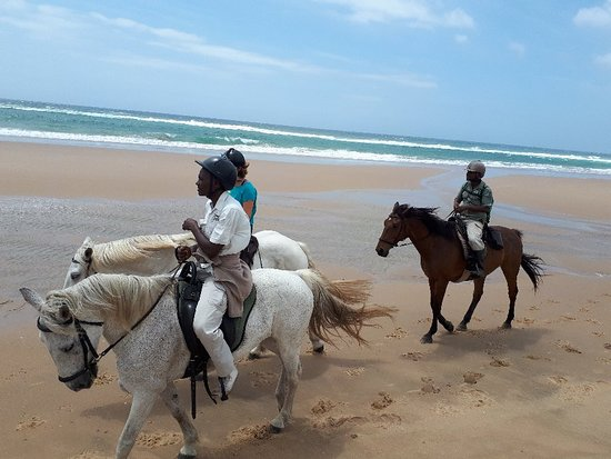 Bhangazi Horse Safaris Photo