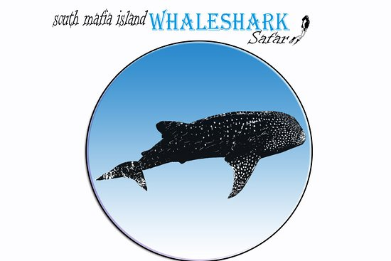 South Mafia Island Whale Shark Safari