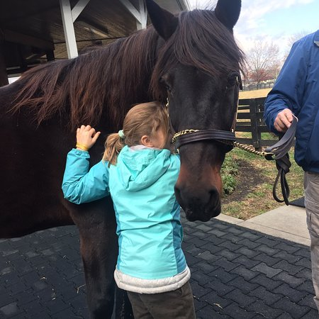 Kentucky Horse Park (Lexington) - 2018 All You Need to Know BEFORE on