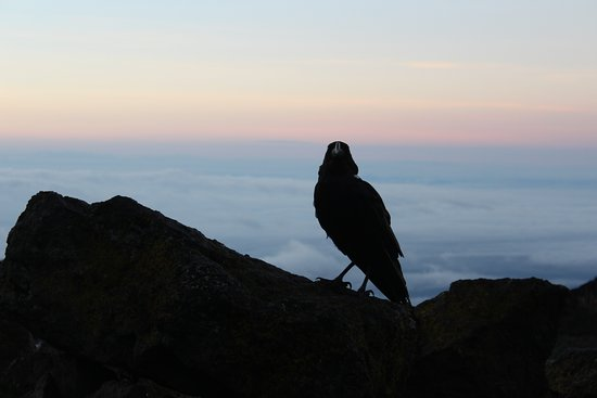 Foreground: raven. Background: carpet of clouds
