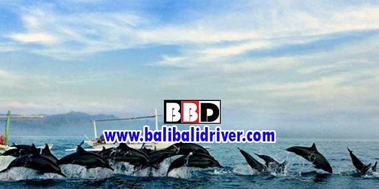 Bali Bali Driver