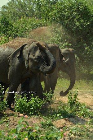 Udawalawe Safari Fun Εικόνα