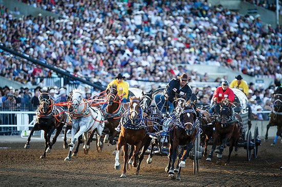 The Calgary Stampede
