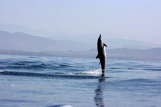 Descubriendo playas, delfines y...