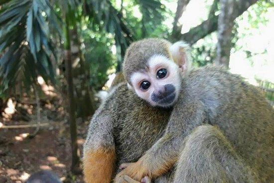 Aventure en tyrolienne à Monkey Jungle