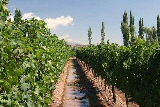 Wineries tour in Mendoza with La...