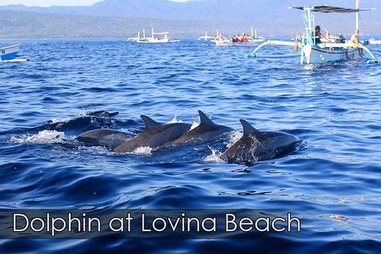 Bali Dolphin Watching Sunrise Tour in...