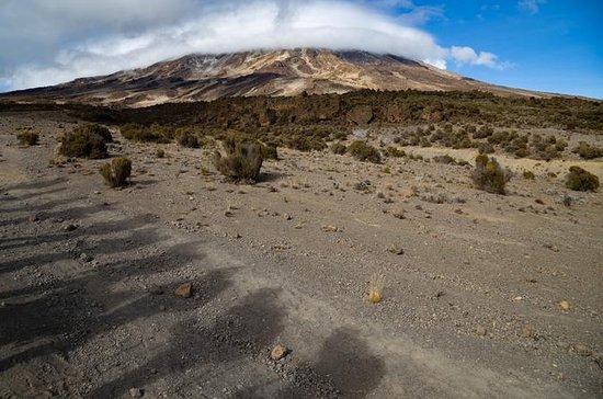 Subida do Kilimanjaro, Rota Lemosho...