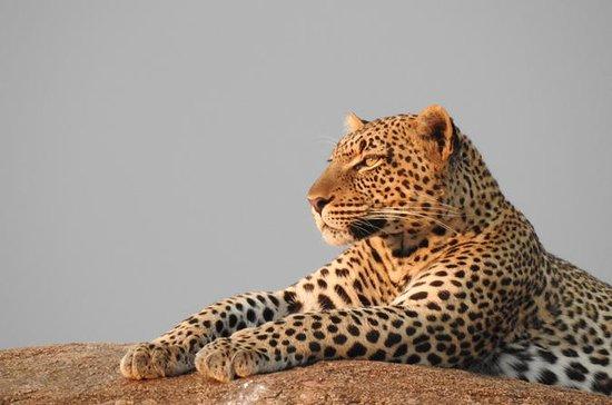 4 jours - Lac Manyara, Serengeti et...