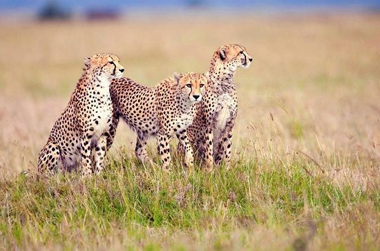 3 Days Camping Safari to Serengeti...