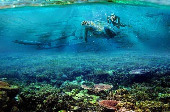 Buceo en la Isla Sapi