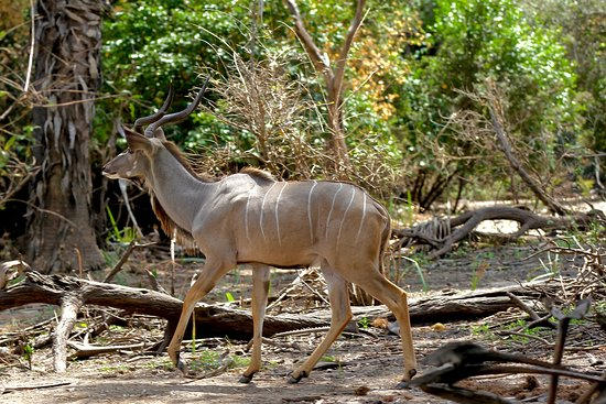 Daggaboys Tanzania Safaris