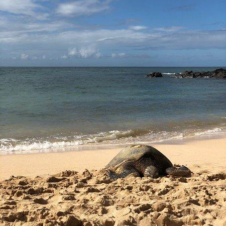 Laniakea Beach-bild