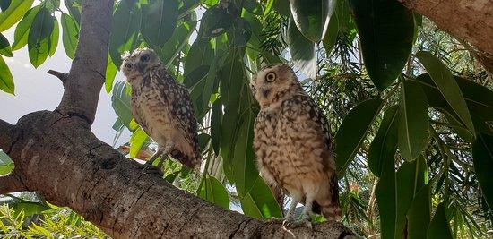 Guia, Portugal: Spacer wśród zwierząt