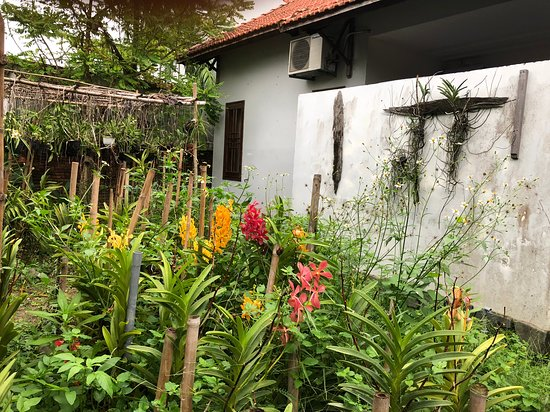 The Hoi An Orchid Garden Villas: orchid: mokara