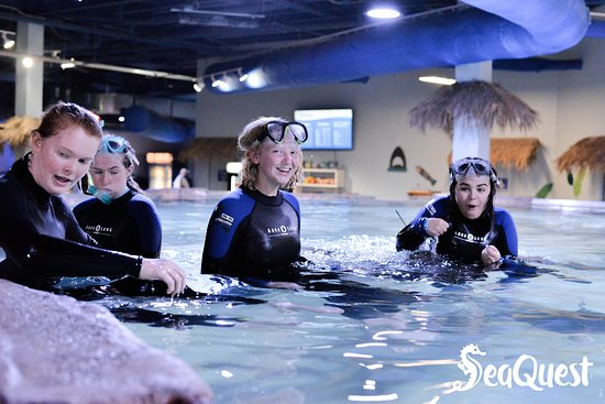 Folsom, CA: Grab your friends! Snorkeling with the Stingrays is blast.