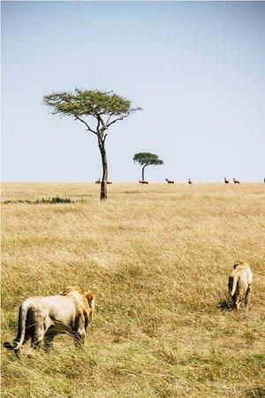 Nairobi Region, Kenya: getlstd_property_photo