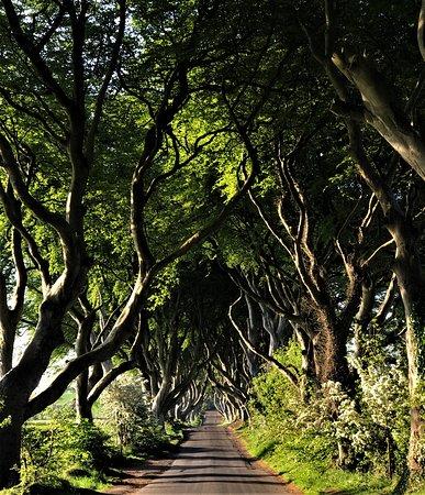 Dark Hedges in Co Antrim, N Ireland-May 2017