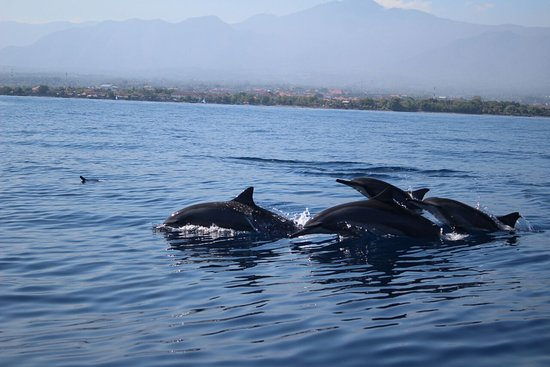 Saraswati Lovina Dolphin
