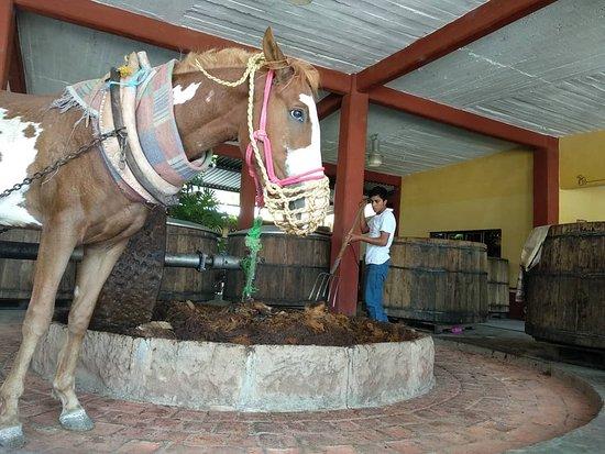 Oaxaca-bild