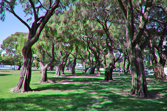 Rockingham, Australia: Grass and trees