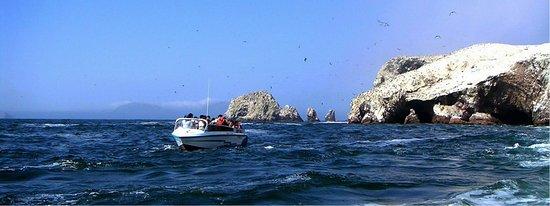 Las islas Ballestas a su entera disposición, reservas@antaraperu.com