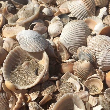 Hackberry, LA: Shell Paradise!
