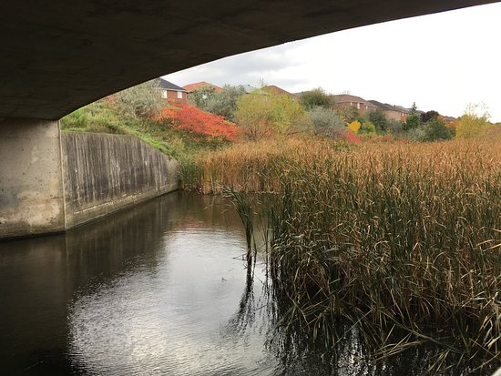 Lisgar Meadow Brook Trail