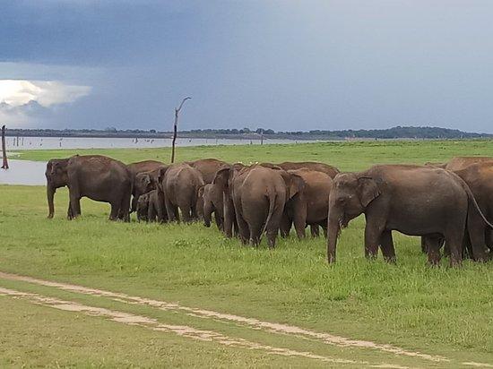 Amaya Lankan Tours