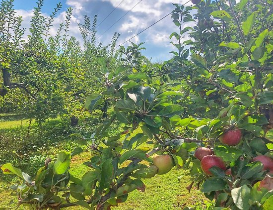 Always fun to visit Wheeler's Orchard on Fredonia Mountain in Dunlap TN. Highlights include: Pick-your-own apples that are sustainably grown; cold fresh apple cider; locally made foods and artwork in the gift shop; and goats, mules and chickens to feed.