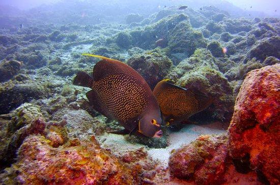 Upptäck Dykning på Curacao