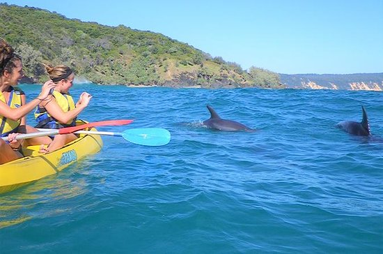 Kayak with Dolphins and 4WD Great...