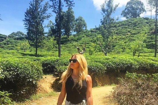 03 Days Highlights Of Sigiriya...