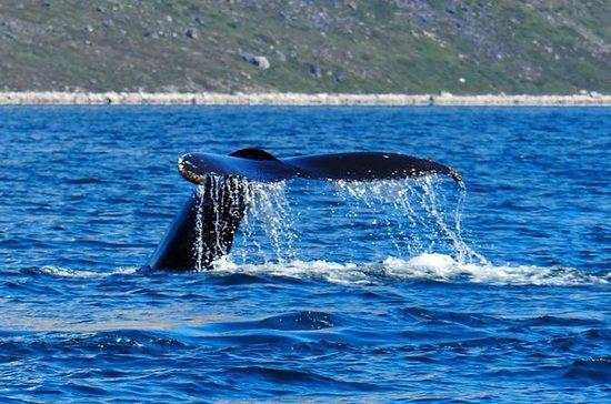 クジラ&アイス