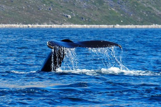 Whales & Ice