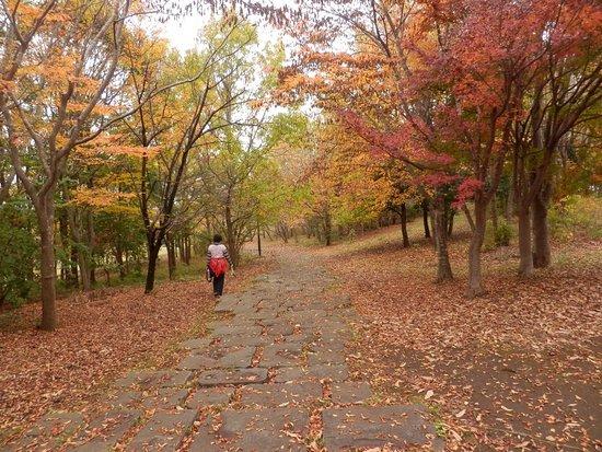 北総花の丘公園 (印西市)北総花の丘公園北総花の丘公園