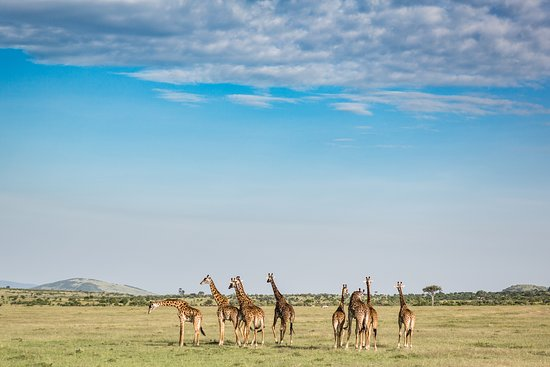 Exciting Africa Holidays