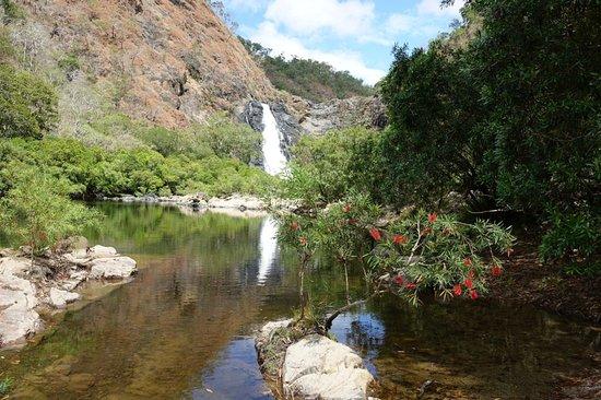 Bloomfield, أستراليا: bottle bush