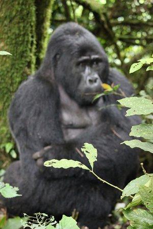 Enchanted Uganda Safaris照片