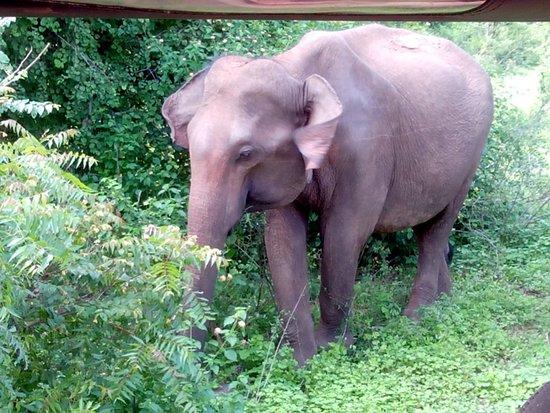 Национальный парк Уда-Валаве, Шри-Ланка: éléphants 4