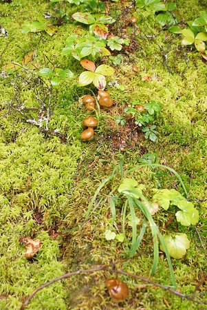 Rogers Pass, Canada: Funny little mushrooms