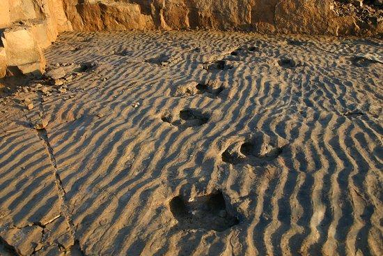 Rehburg-Loccum, Alemanha: Iguanodon tracks.