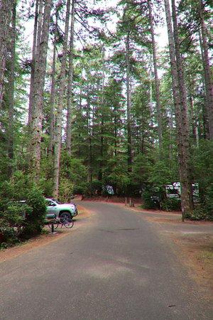 Jessie M. Honeyman Memorial State Park: The campground